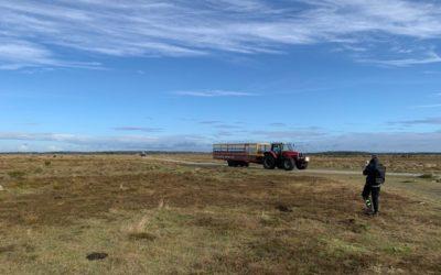 Ø-tur til skønne Læsø – af Kathrine Andersen